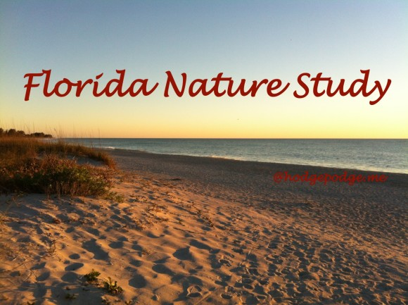 Florida Nature Study - with Barb-Harmony Art Mom