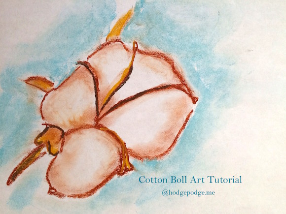 How to Draw a Cotton Boll