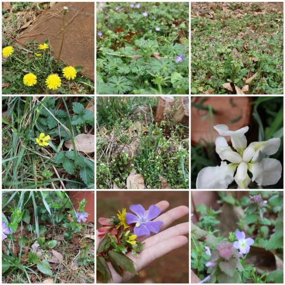 Spring Discoveries in Our Backyard